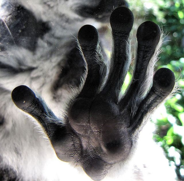 2e092342b7fc49ab5f2bce643918a012-lemurs-hands-on